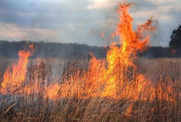 Самопал или неосторожность? Вокруг Балакова опять горят поля