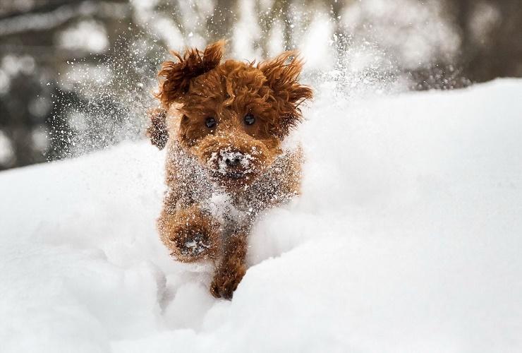 Погода в Балакове 12 февраля. Зима уходить не намерена