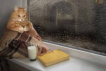 Погода в Балакове 24 сентября. Дождь настроение не портит