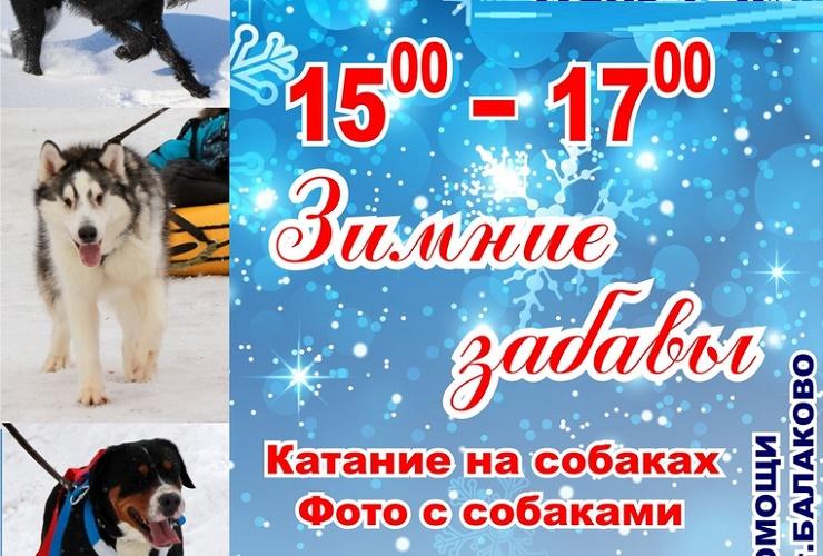 Приходите на зимние покатушки с собаками