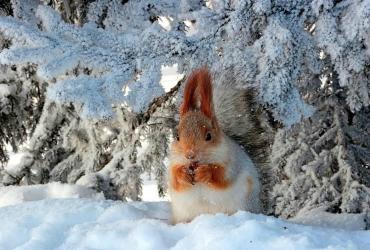 Погода в Балакове 6 декабря. Зачарованные деревья покрыты серебристым инеем
