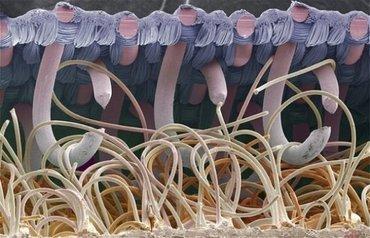 ТЕСТ: Без микроскопа их не увидишь! Для людей с развитым воображением и интуицией.