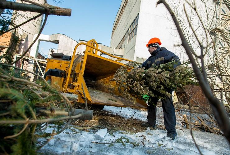 Все елки будут вывезены бесплатно