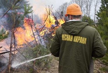 Не нарвись в лесу на неприятности. По области введен особый противопожарный режим