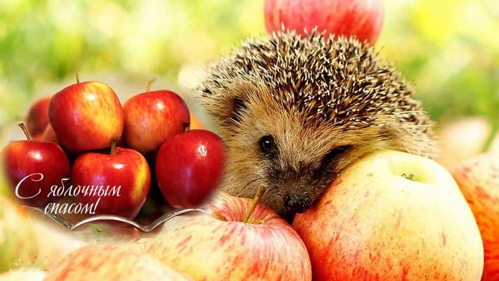 Сегодня - яблочный спас. Что делать с освященными фруктами