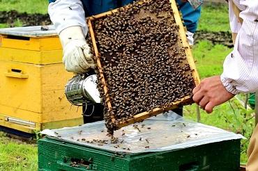 Чтоб не навредить трудягам-пчелам