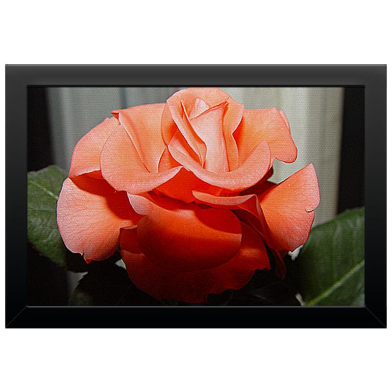Printio Холст 20×30 Алая роза.