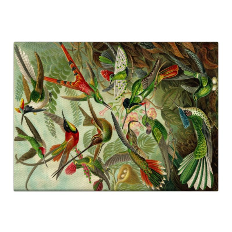 Printio Холст 40×55 Колибри (trochilidae, ernst haeckel)