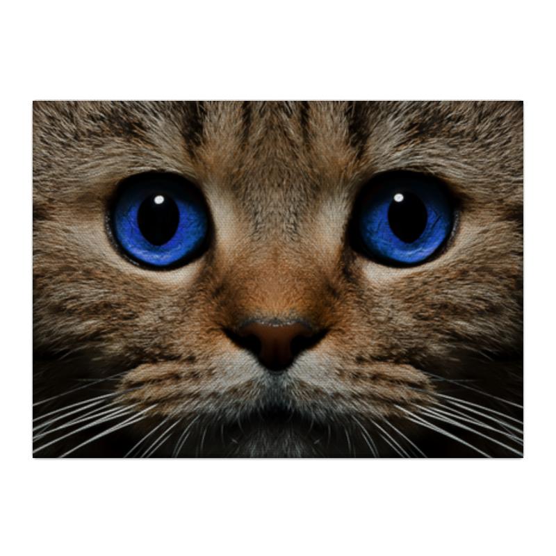 Printio Холст 40×55 Фото кота