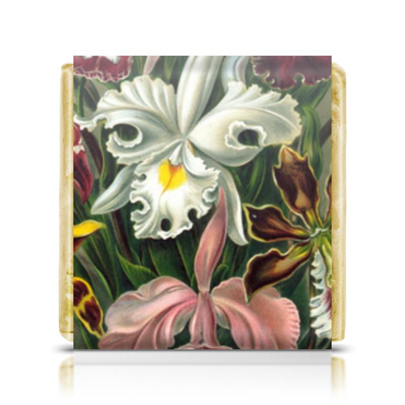 printio шоколадка 3 5×3 5 см маина радость Printio Шоколадка 3,5×3,5 см Орхидеи 3 (orchideae, ernst haeckel)