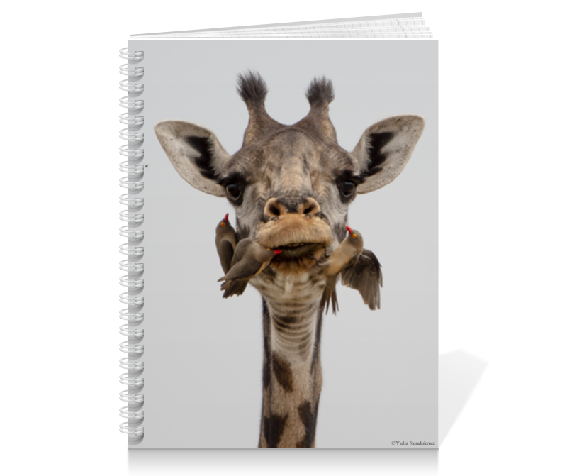 Printio Тетрадь на пружине Жираф с птицами (серия фото) 4