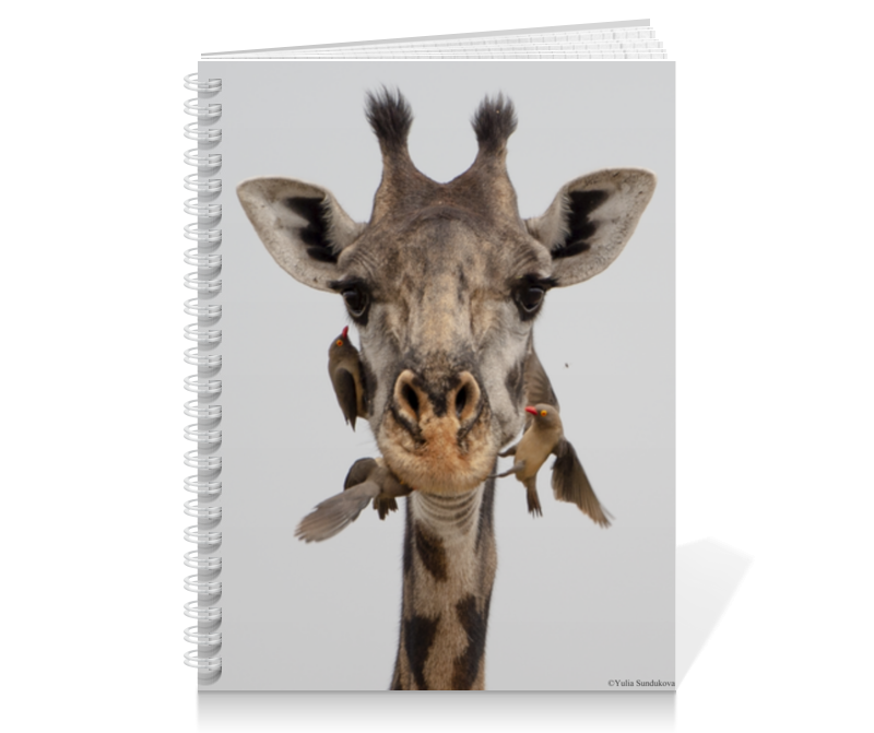 Printio Тетрадь на пружине Жираф с птицами (серия фото) 3