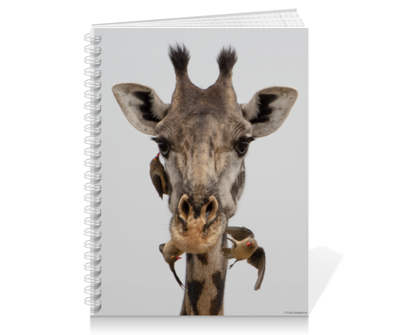 Printio Тетрадь на пружине Жираф с птицами (серия фото) 1