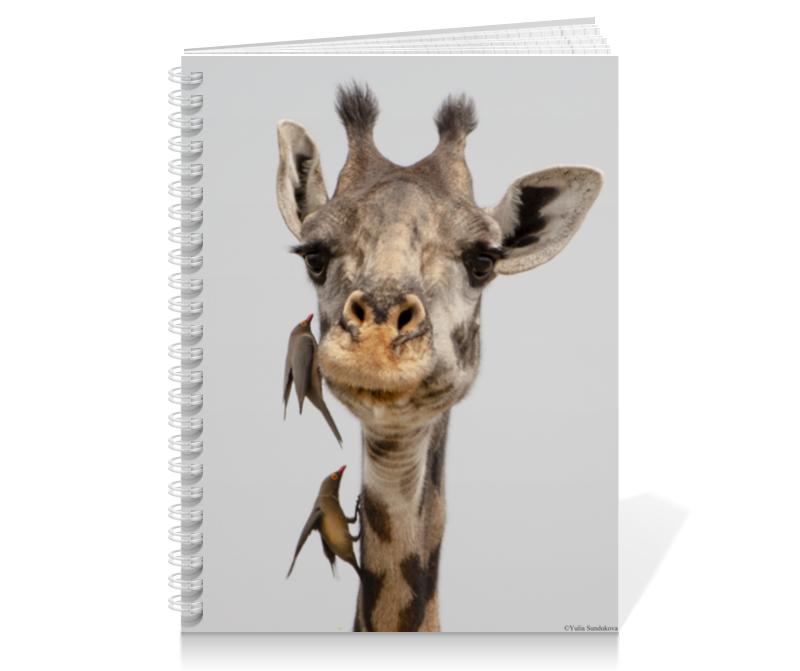 Printio Тетрадь на пружине Жираф с птицами (серия фото) 5