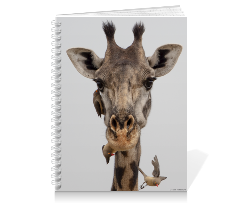 Printio Тетрадь на пружине Жираф с птицами (серия фото) 2