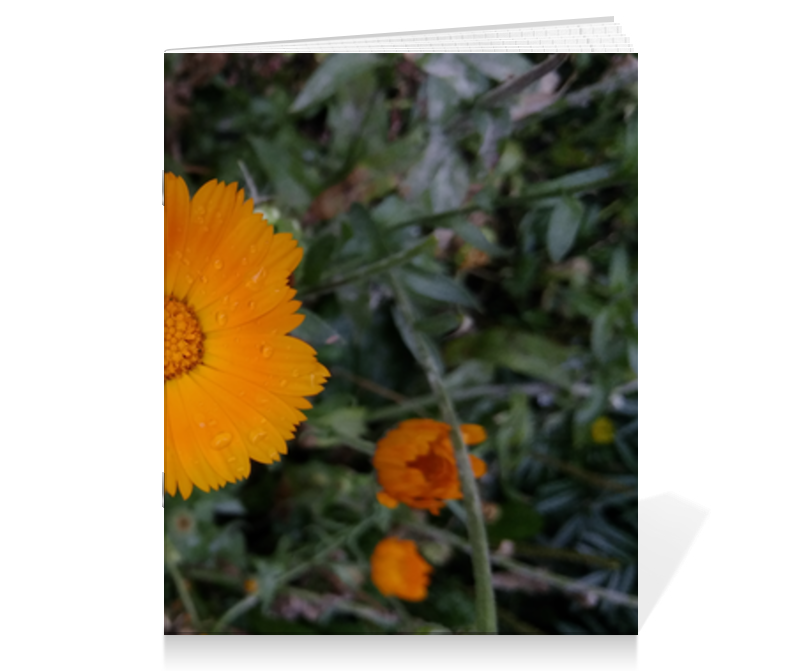 Printio Тетрадь на скрепке Летние цветы