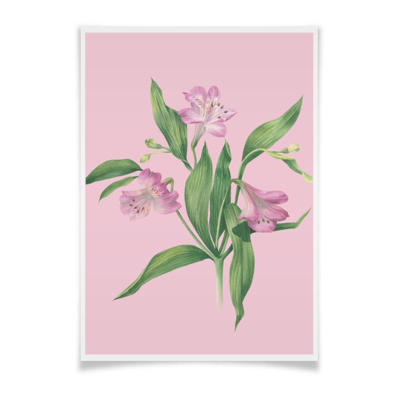 Printio Плакат A3(29.7×42) Цветы альстромерии 2