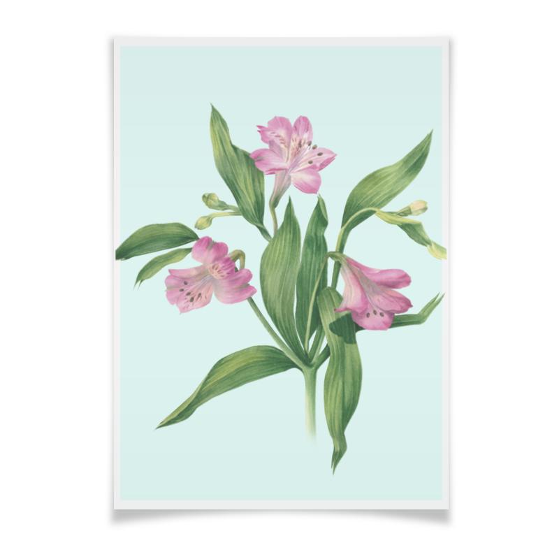 Printio Плакат A3(29.7×42) Цветы альстромерии