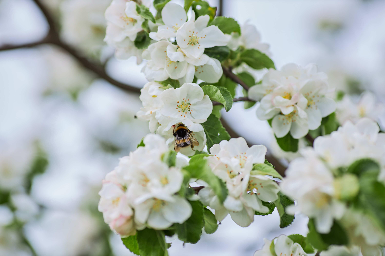 Весна в Сарове