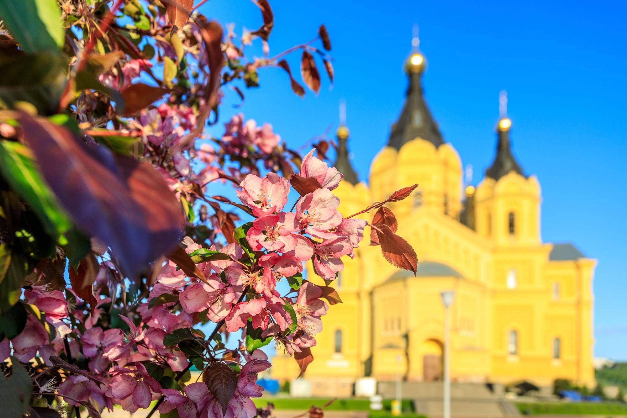Онлайн-трансляция пасхального богослужения пройдет на портале «Серафимова земля» с 1 на 2 мая