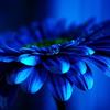 all_flower.livejournal.com