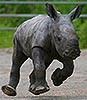 baby_rhino.livejournal.com