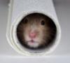 hamster_xoma.livejournal.com