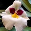 orchids_lux.livejournal.com