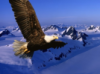 petit_eagle.livejournal.com