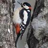 ru_birds.livejournal.com