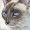 thai_cats.livejournal.com