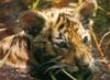 tigrenok_t.livejournal.com