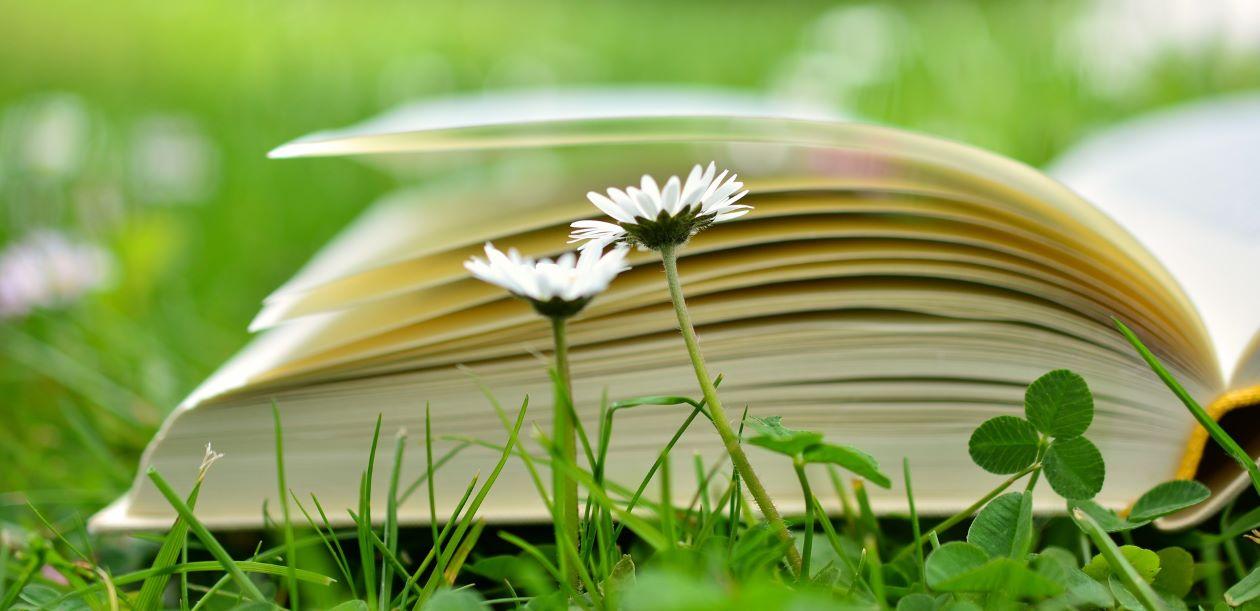 Summer: reading for pleasure Part 2. Beginner level