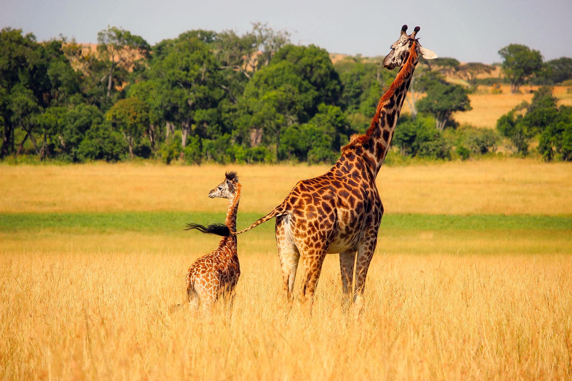 Word story – safari
