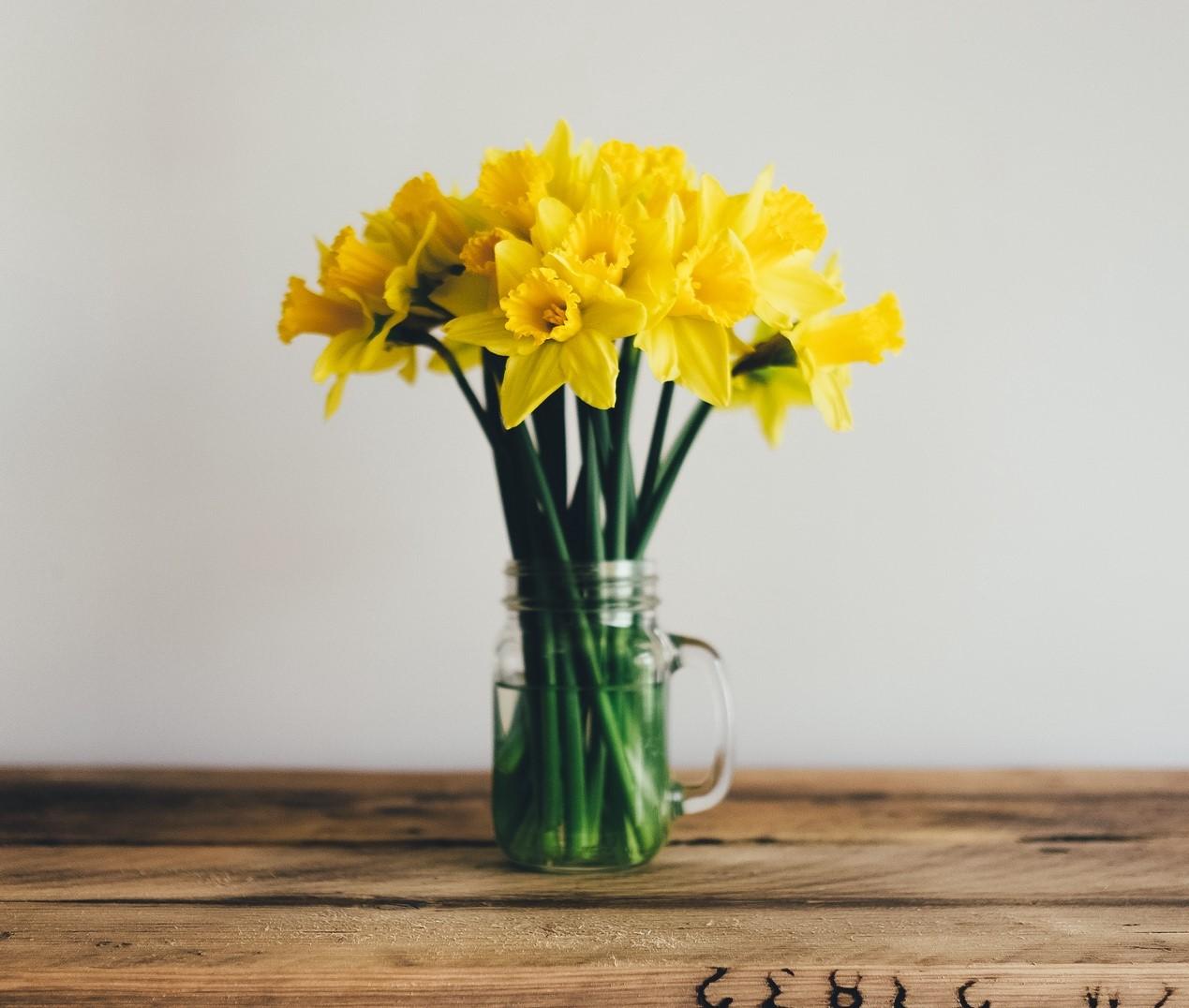 Word story – daffodil