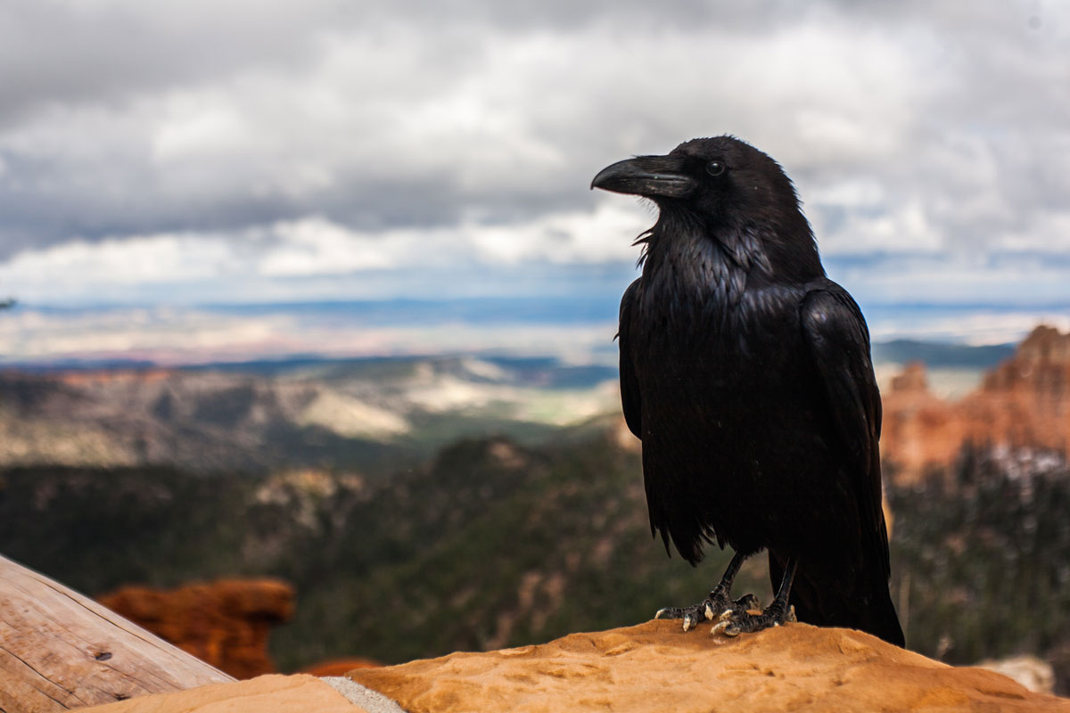 Word story - as the crow flies