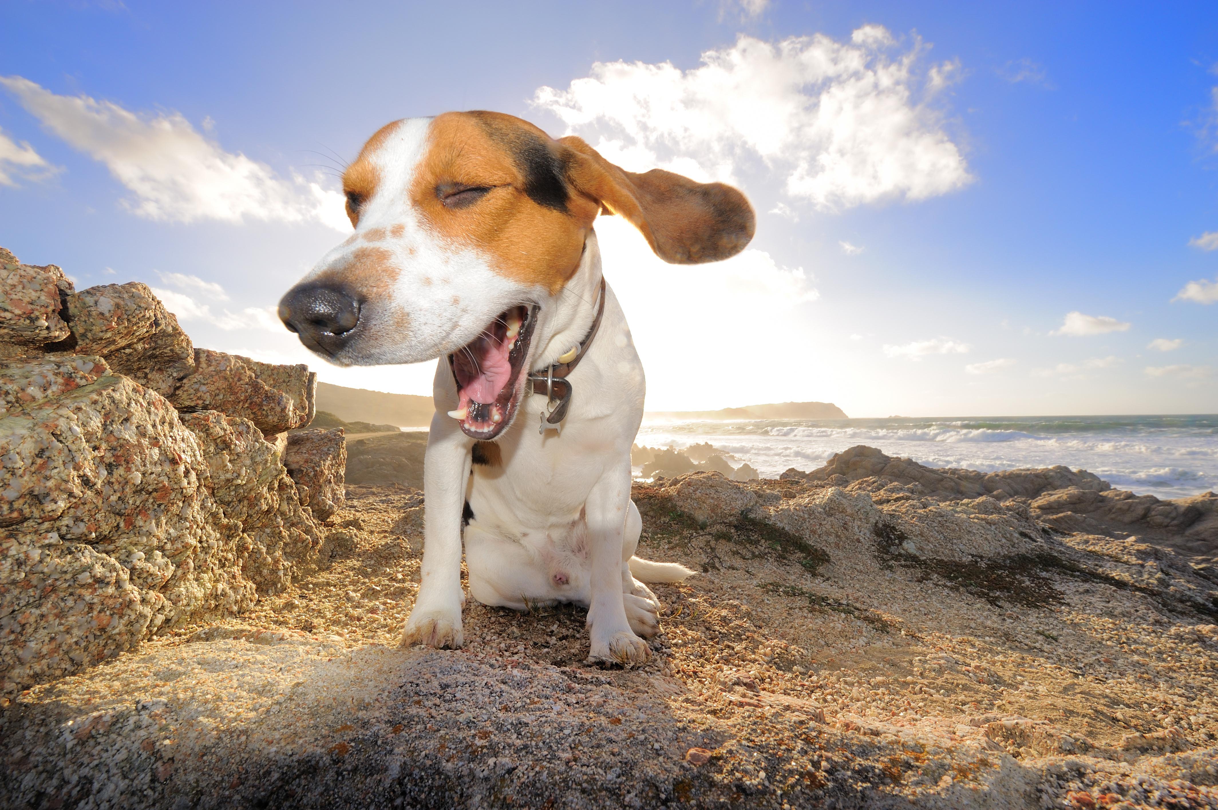 Word story – dog days
