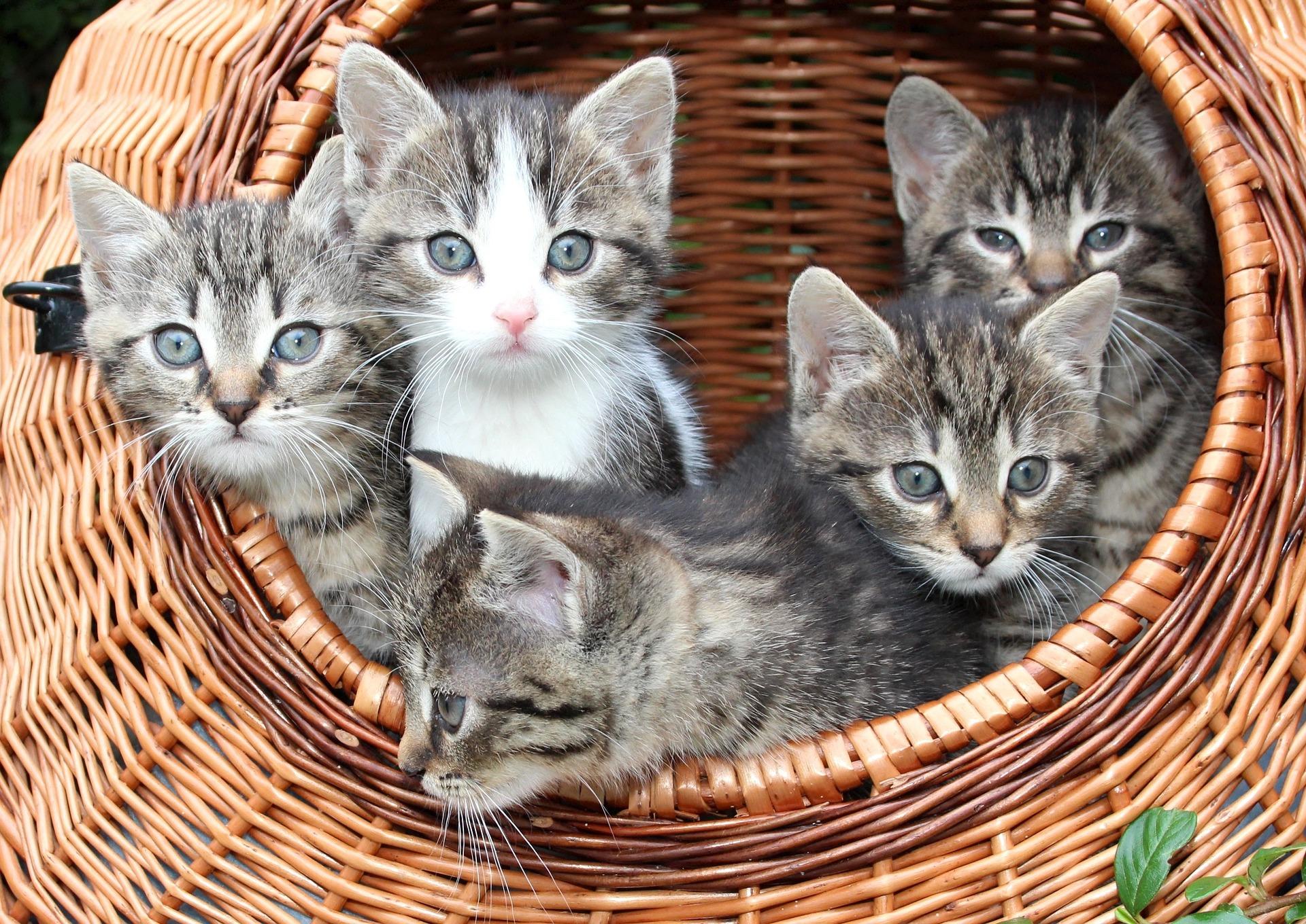 Word story - like herding cats