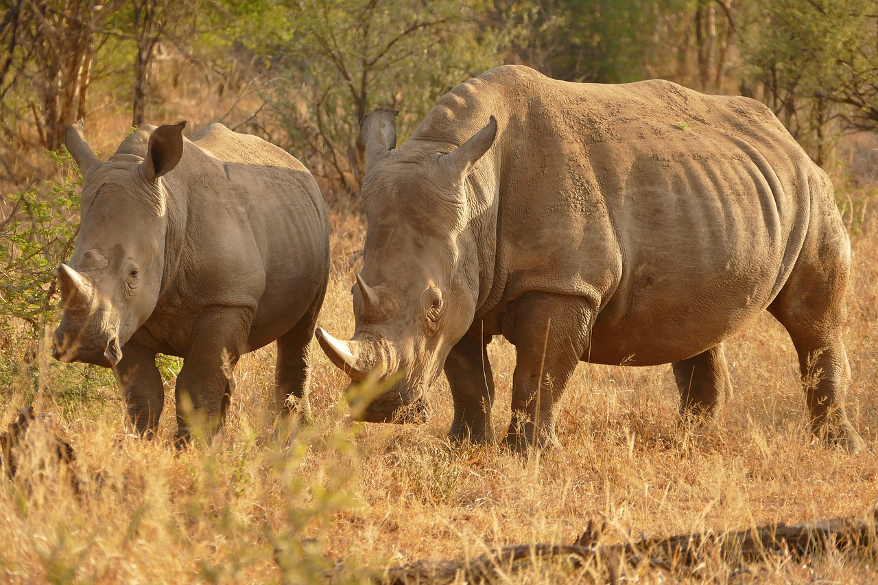 Every rhinoceros is proud of its horn