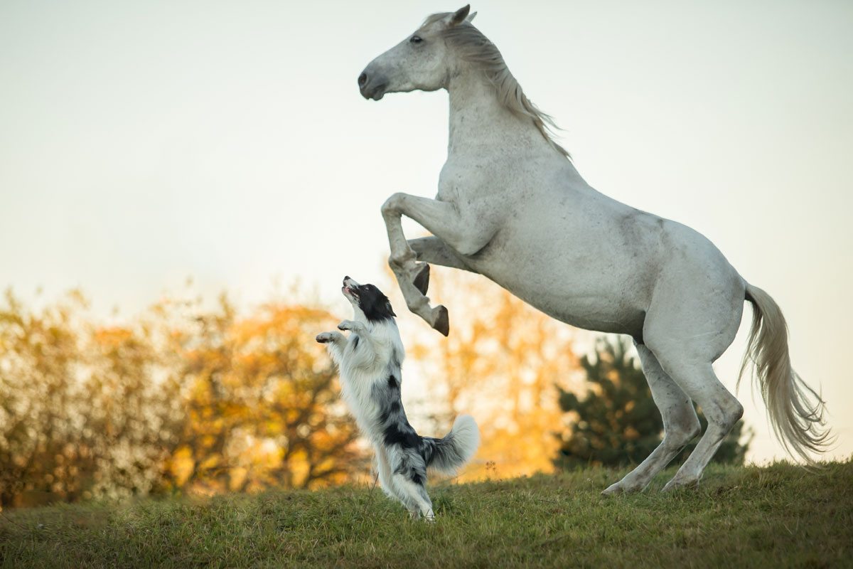 Word story – dog and pony show