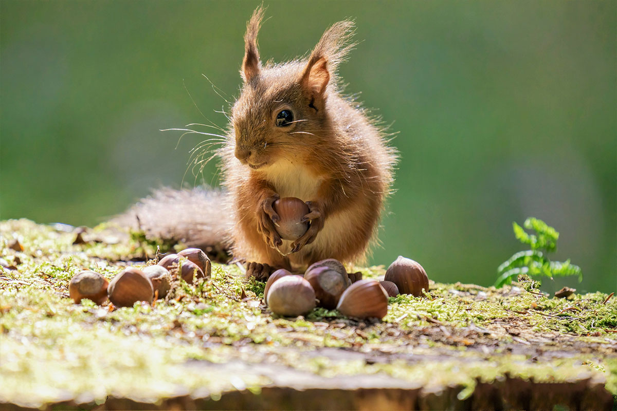 Word story – squirrel away