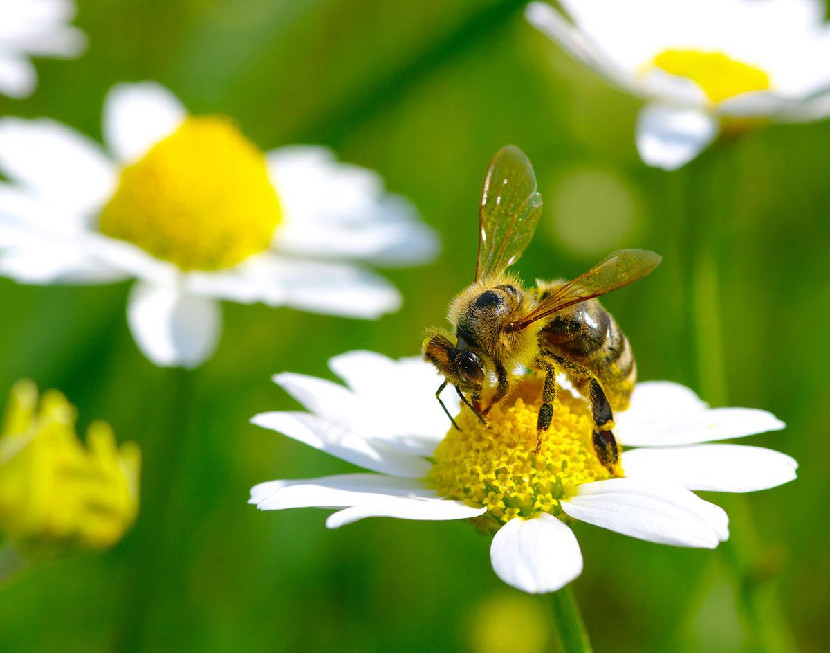 Word story – bee's knees