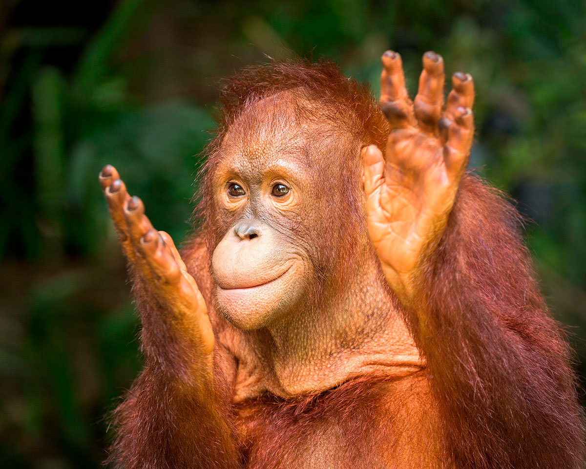 Word story – monkey business
