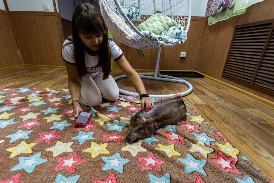 Фото Невозможно устоять: семейство мини-пигов влюбляет в себя новосибирцев 14