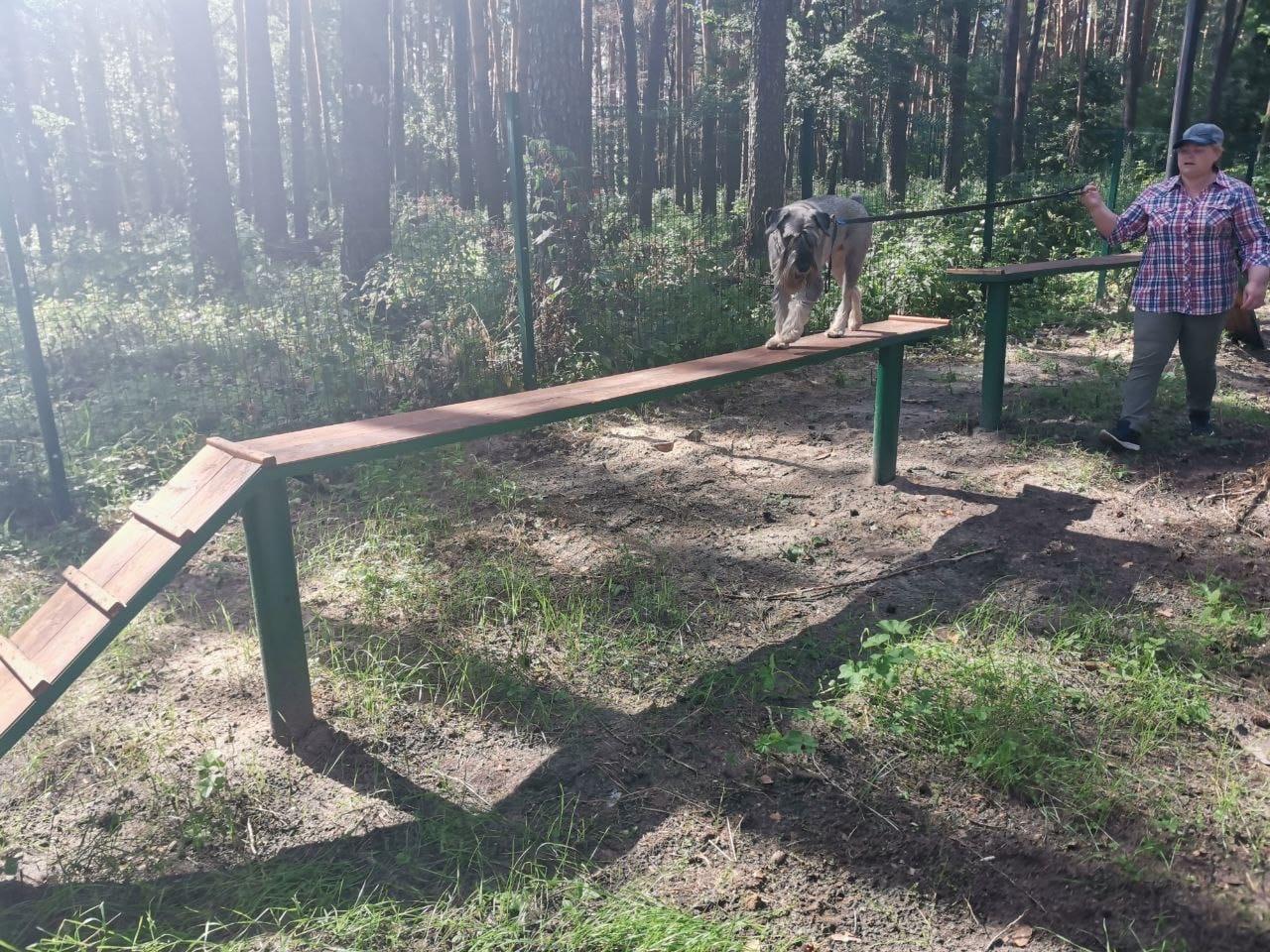 Где собак выгуливать будем?