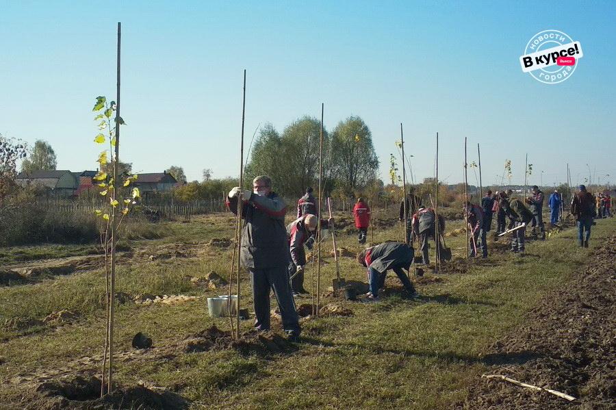 Зелёную зону формируют в рамках проекта «Эколант» в Мотмосе
