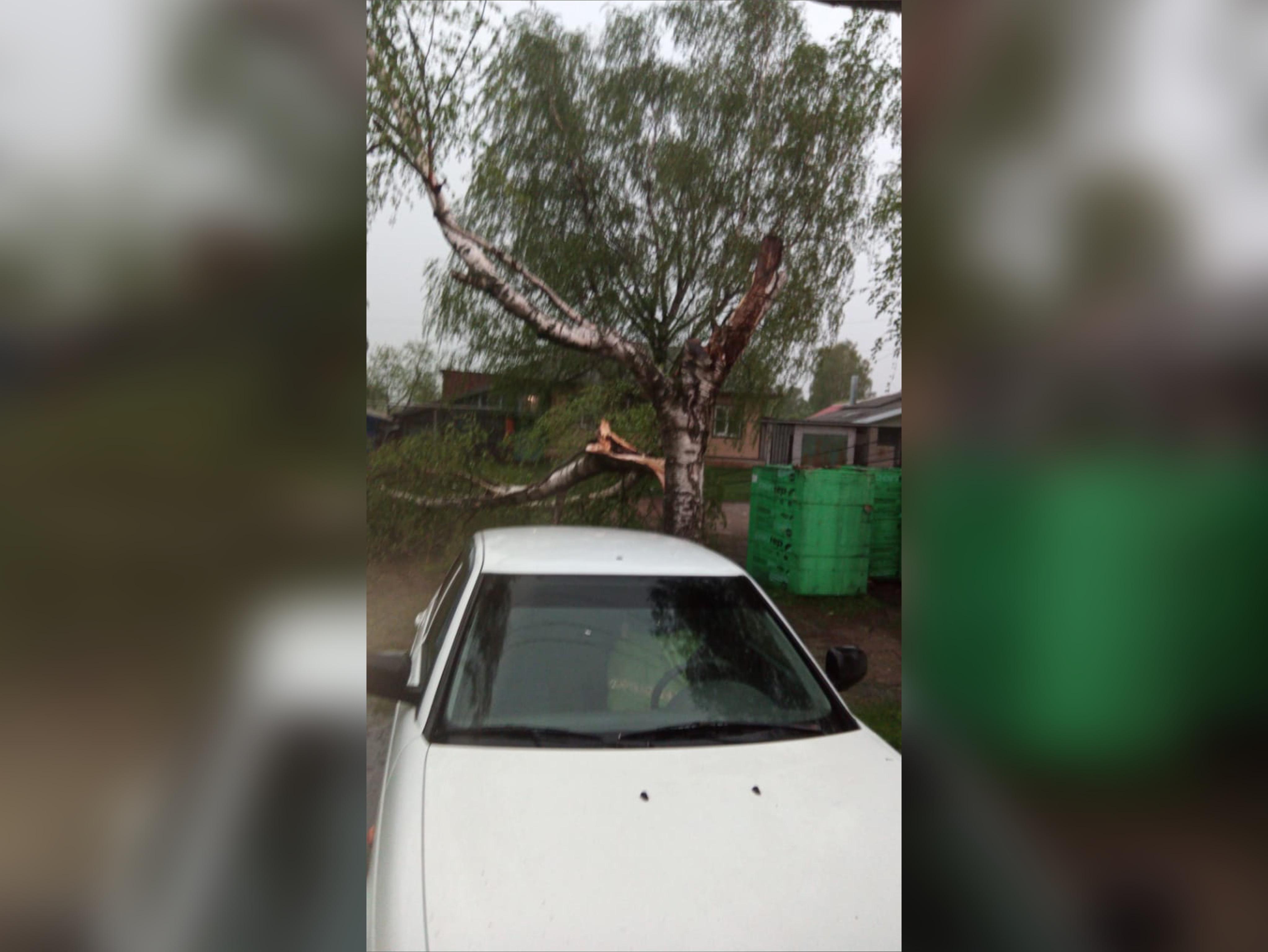 Последствия грозы: в округе повалило несколько деревьев