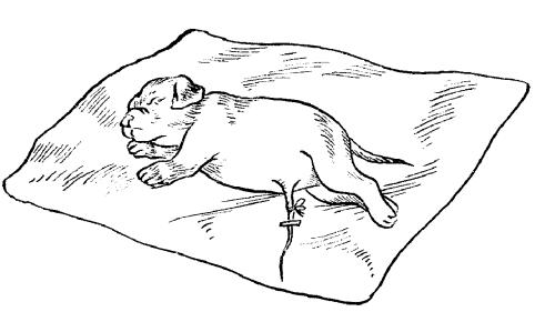 Беременность среднеазиатских овчарок Алабаев и роды - ПесикХаус  