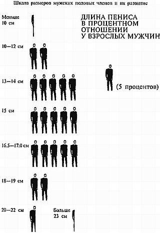 Сравнение членов разных парней