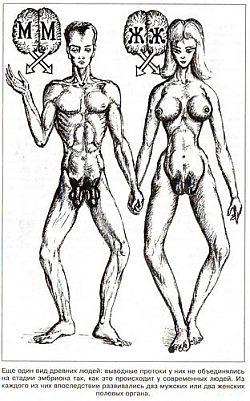 Органов гермафродита половых фото Секс гермофродитов